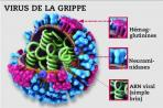 Infections hivernales - LA VACCINATION ANTIGRIPPALE-0
