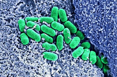 Microbiote (rond)